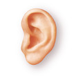 canvas print picture - human ear isolated on white
