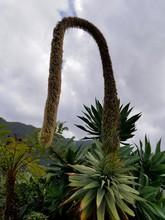Arbre Tropical Madère