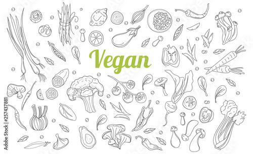 Fototapeta Sketch style. Hand drawn set of healthy food ingredient doodles in vector. Healthy diet vegan food, veggie protein sources. obraz