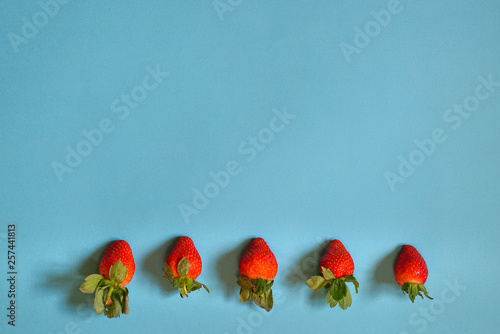 Background : sweet red strawberries on blue background - 257441813