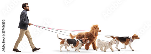 Male dog walker walking four different dogs Wallpaper Mural