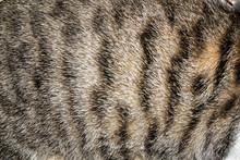 Cat Fur Closeup Texture Background