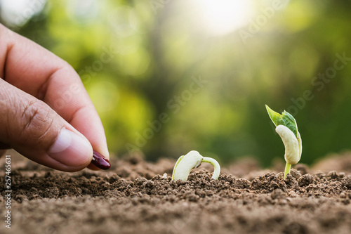 Photo hand planting sprout in garden with sunshine