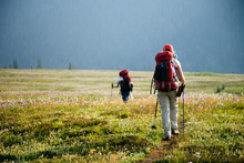 A Group Of Backpackers Hike Through A Meadow Filled With Western Anemone Wildflowers In The Purcell Mountains.