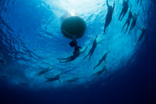 Swimmers Round The Buoy During...
