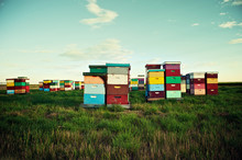 Colorful Bee Hives On The Prairies On Southern Alberta, Canada.