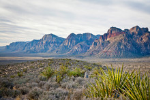 Red Rock Canyon National Conservation Area, Nevada, USA