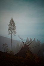 One Large Tree Is Left Standing In A Misty Cutblock Beside A Large Slash Pile, Ready To Be Burnt, After Foresty Crews Clear-cut This Area Near Harrison Lake In British Columbia, Canada.