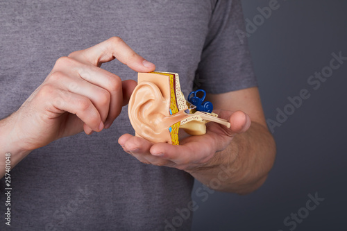 Photo Man holding the model of the human inner ear in hands