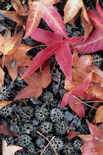 Close-up Of Colored Leaves On Ground.
