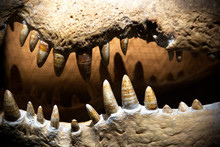 Crocodile Teeth.