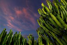 Sky At Sunset Above Cacti, San...