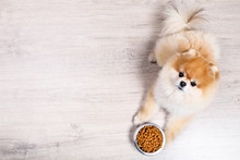 Pomeranian Dog With Dry Food I...