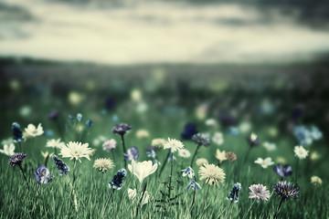 Panel Szklany Eko Spring Background with Wild Flowers