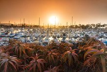 View Of Dana Point Marina At Sunset, California, USA