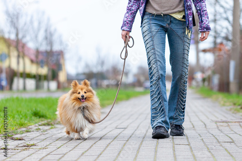 Fotografie, Tablou  A woman leads her dog on a leash