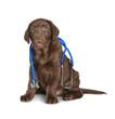 Leinwandbild Motiv Cute dog with stethoscope as veterinarian on white background