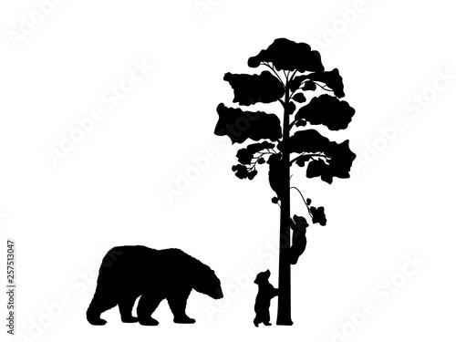 Fényképezés  Two bear cubs climbing tree black silhouette animals