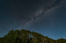 Milky Way Over Aspen Tree Grov...