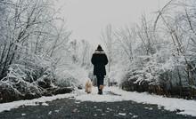 Woman Walking Fluffy Dog On Snowy Path Through The Woods