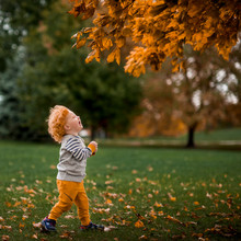 Toddler Boy Walking And Laughing In Park In Autumn