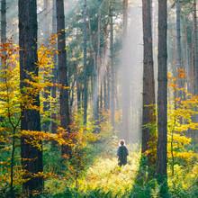 Hiker In Hoge Kempen National Park In Autumn