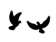 Pigeons Bird  Black Silhouette...
