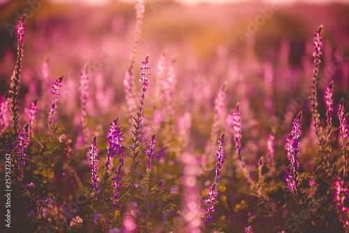 pole-dzikich-kwiatow