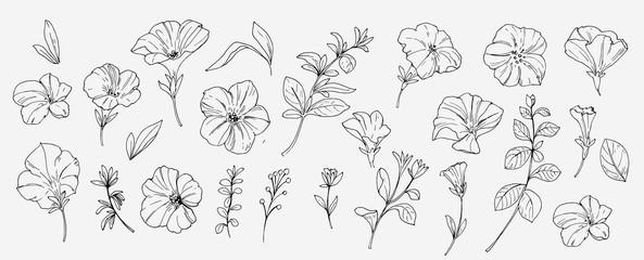 Skicirajte tropsko cvijeće i lišće. Vektorska ilustracija