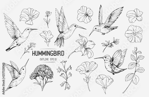 Fototapeta Hummingbirds and tropical flowers