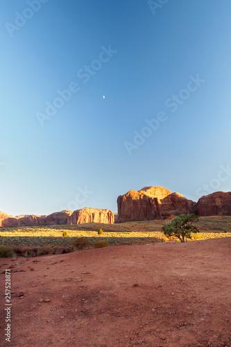 Poster Maroc Golden light on tree in Monument valley , Arizon , Utah , USA