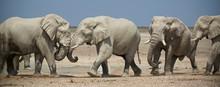 Elephants At The Okaukuejo Waterhole In Etosha National Park, Namibia