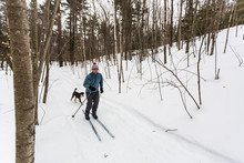 A Man Cross Country Skiing With His Dog On A Forest Trail In Epping, New Hampshire.