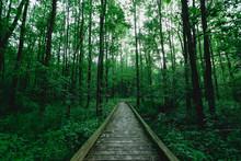 Boardwalk Across Lush Forest