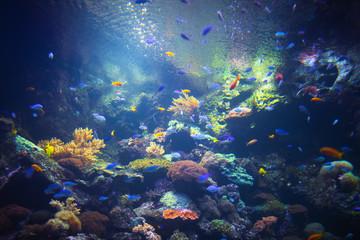 Fototapeta na wymiar colorful aquarium background with underwater plants