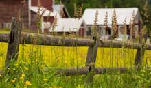 Tall Grass Growing Along Rail ...