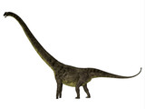 Mamenchisaurus youngi Dinosaur Side Profile - Mamenchisaurus youngi was a herbivorous sauropod dinosaur that lived in China during the Jurassic Period.
