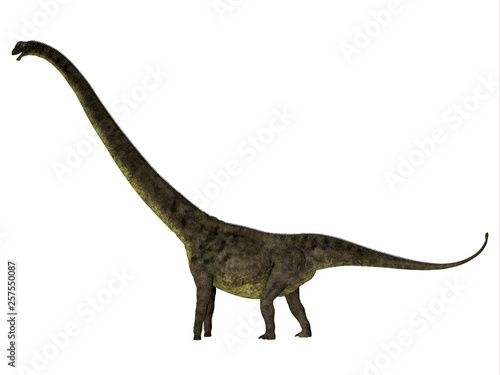 Mamenchisaurus youngi Dinosaur Side Profile - Mamenchisaurus youngi was a herbivorous sauropod dinosaur that lived in China during the Jurassic Period Wallpaper Mural