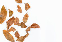 Autumn Of Brown Dry Leaf On Wh...