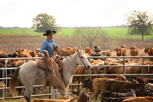 Fotografie, Obraz  Ranching