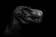 Tyrannosaurus Rex Close Up On ...
