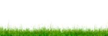 草原 植物 背景 水彩 ...