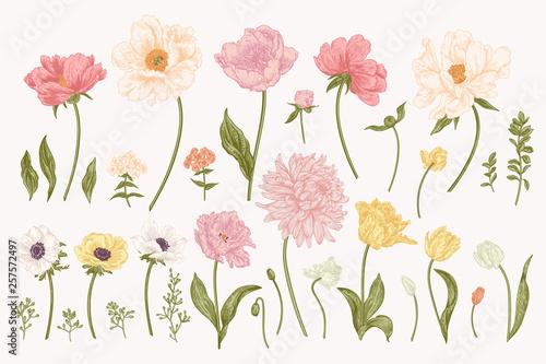 Foto Set with garden flowers.