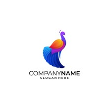 Peacock Colorful Illustration Vector Template