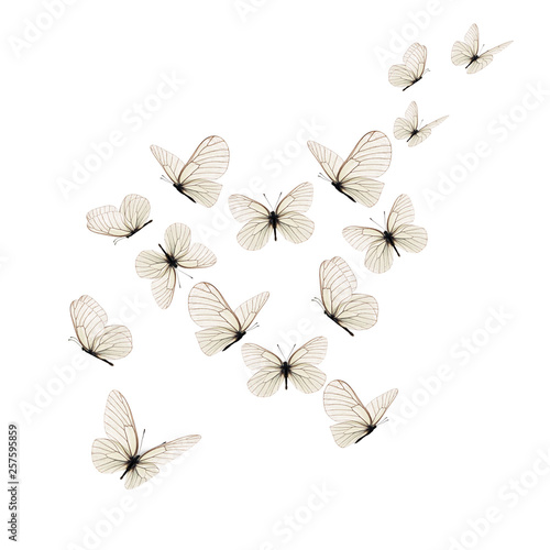 Obraz na plátně  Beautiful white butterfly
