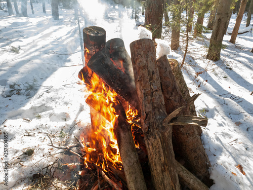 The Burning a fire in the forest close up Canvas Print