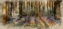 Watercolour Painting Of Beautiful Landscape Of Bluebell Forest In Spring In English Countryside