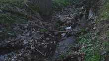 Small Stream Between Trees And...