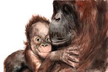 Watercolor Drawing - Animals -...