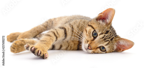 Kitten on white background. Tablou Canvas
